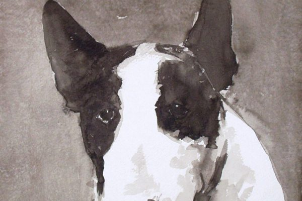 BULL TERRIER INK ON INDIAN RAG PAPER 12 X 12 INCHES IAN MASON.jpg