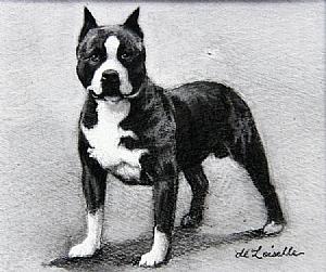American_Staffordshire_Terrier.jpg