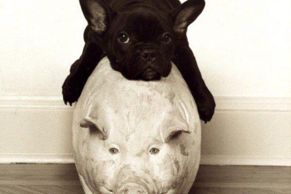 Pigging out.jpg