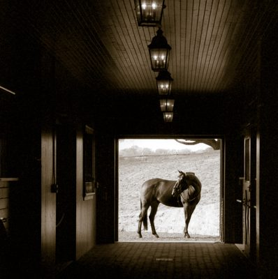 Silhouetted Equine.jpg
