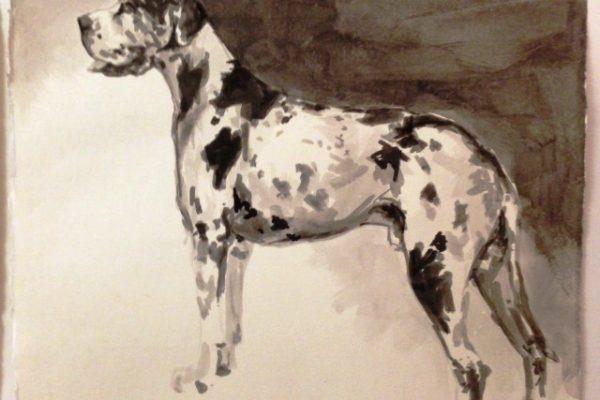Harlequin Great Dane.JPG