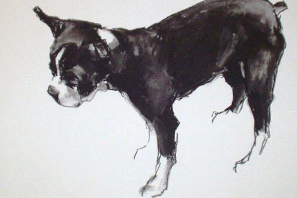 boston terrier charcoal 20 x 20.jpg