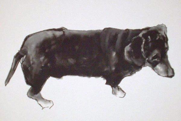 dachshundcharcoal t20 x 20.jpg