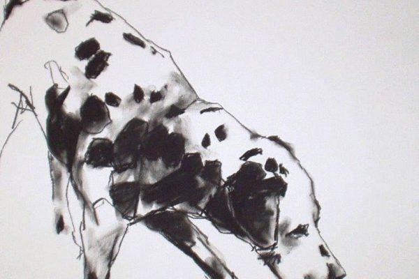 dalmatian charcoal20 x 20.jpg