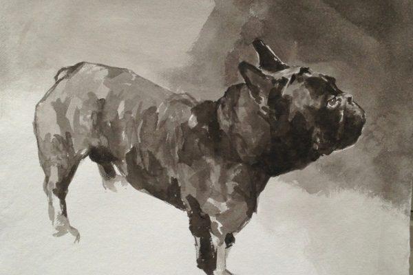 french bulldog 1.JPG