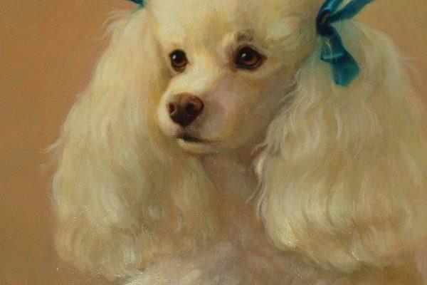 White French Poodle sm-1.jpg