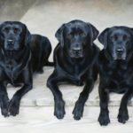 anita baarns dog paintings